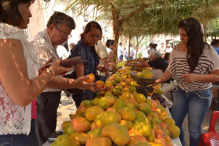 Serán el mango y la ciruela los protagonistas del fin de semana en el municipio de Tequila